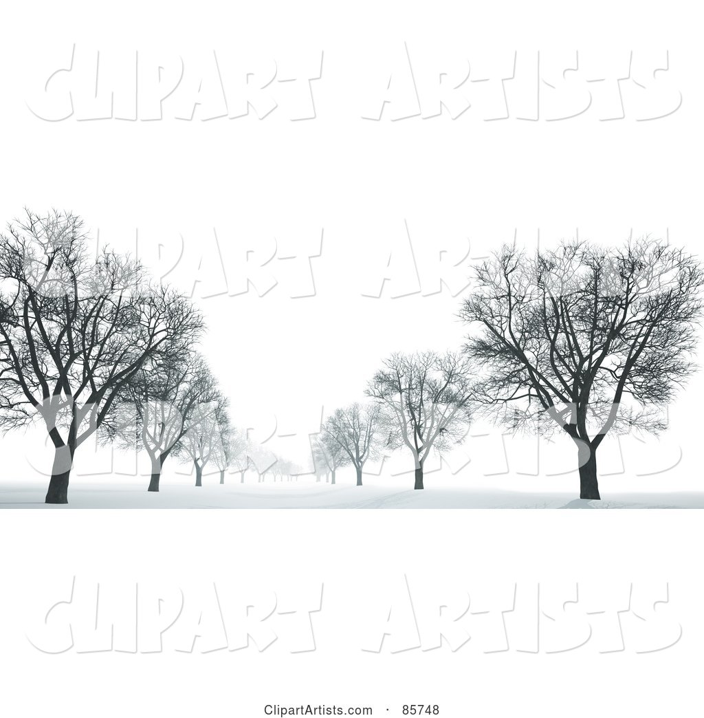 Avenue of Bare Trees in the Snow