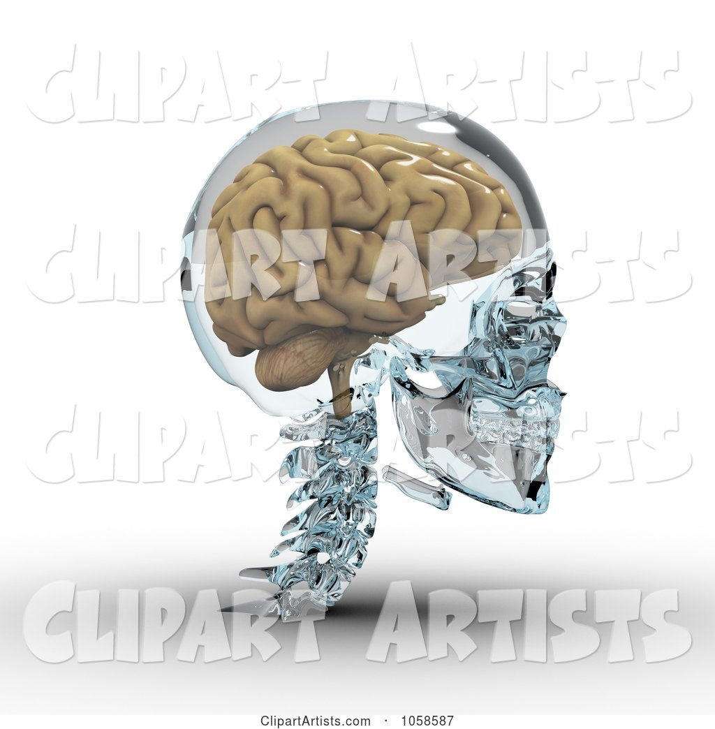 Brain in a Glass Skull - 2