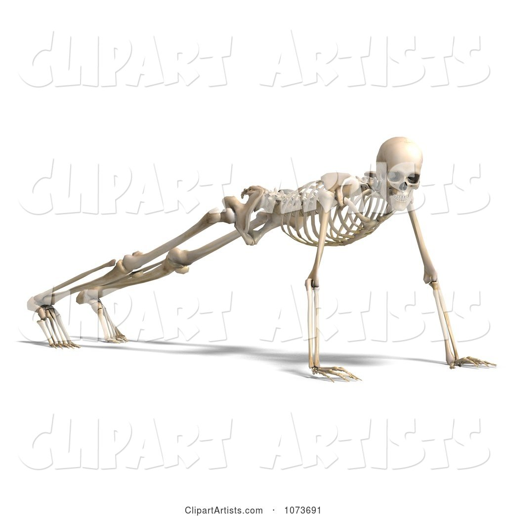 Human Male Skeleton Doing Push Ups