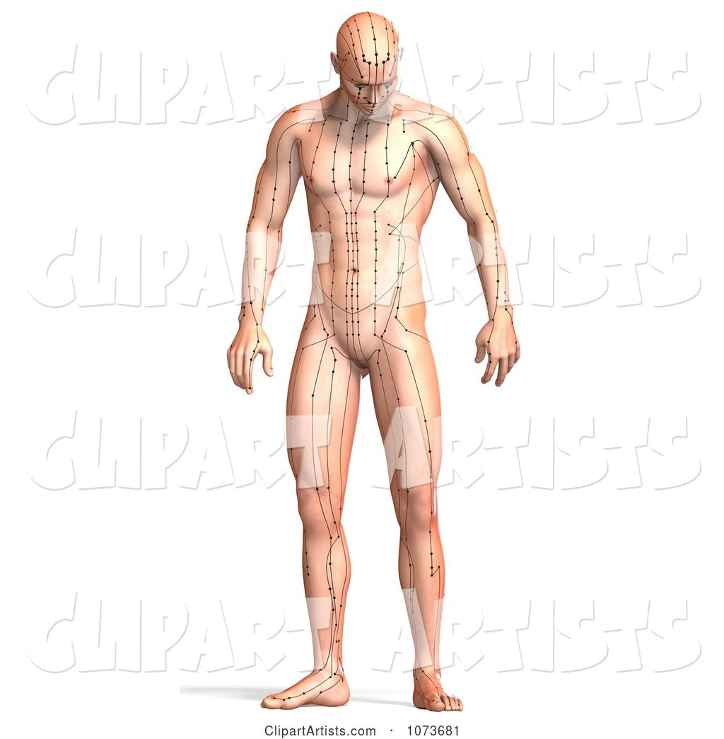 Male Acupressure Acupuncture Chart Body 4