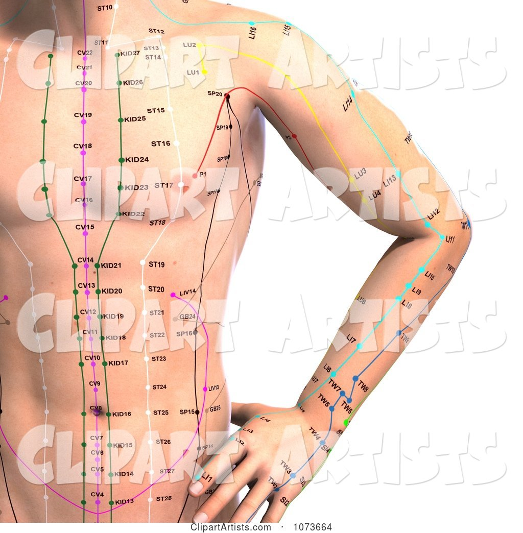 Male Acupressure Acupuncture Upper Body Chart 1