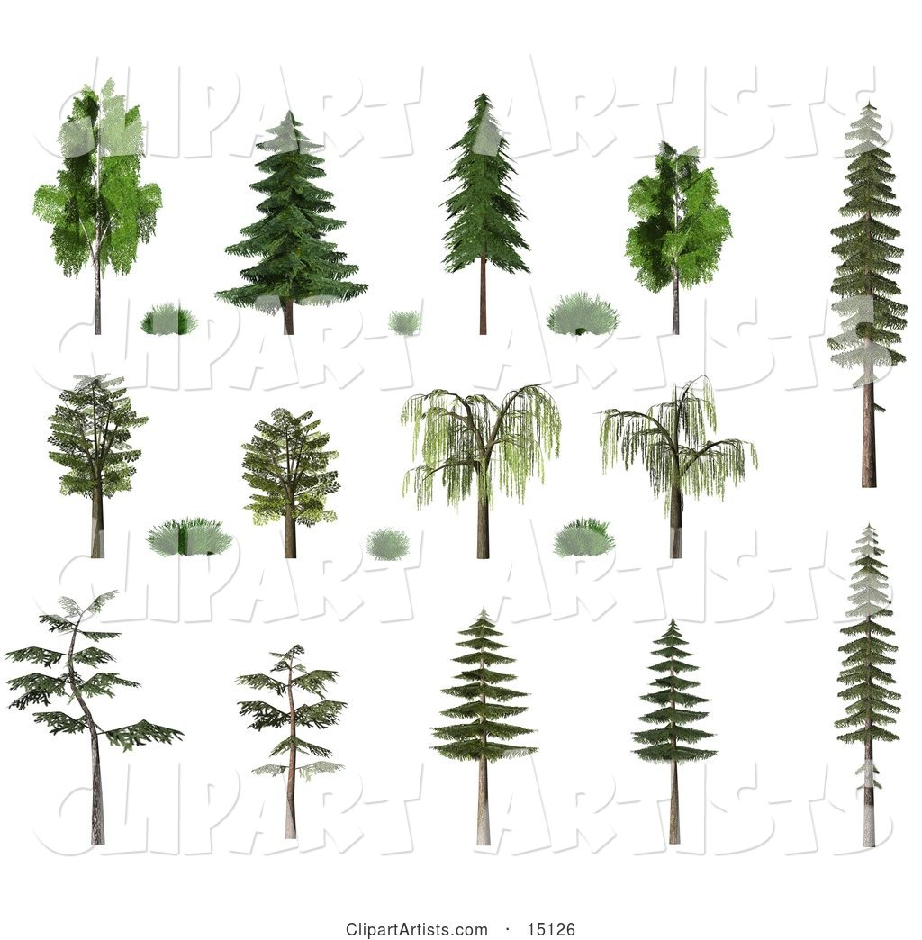 Trees and Shrubs, Including Birch, Oak, Pine, Fir and Willow with Summer or Spring Foliage