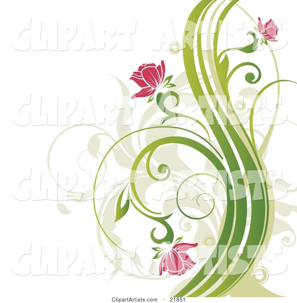 ... Pink Flowers Blooming on Curly Green Plants over a White Background