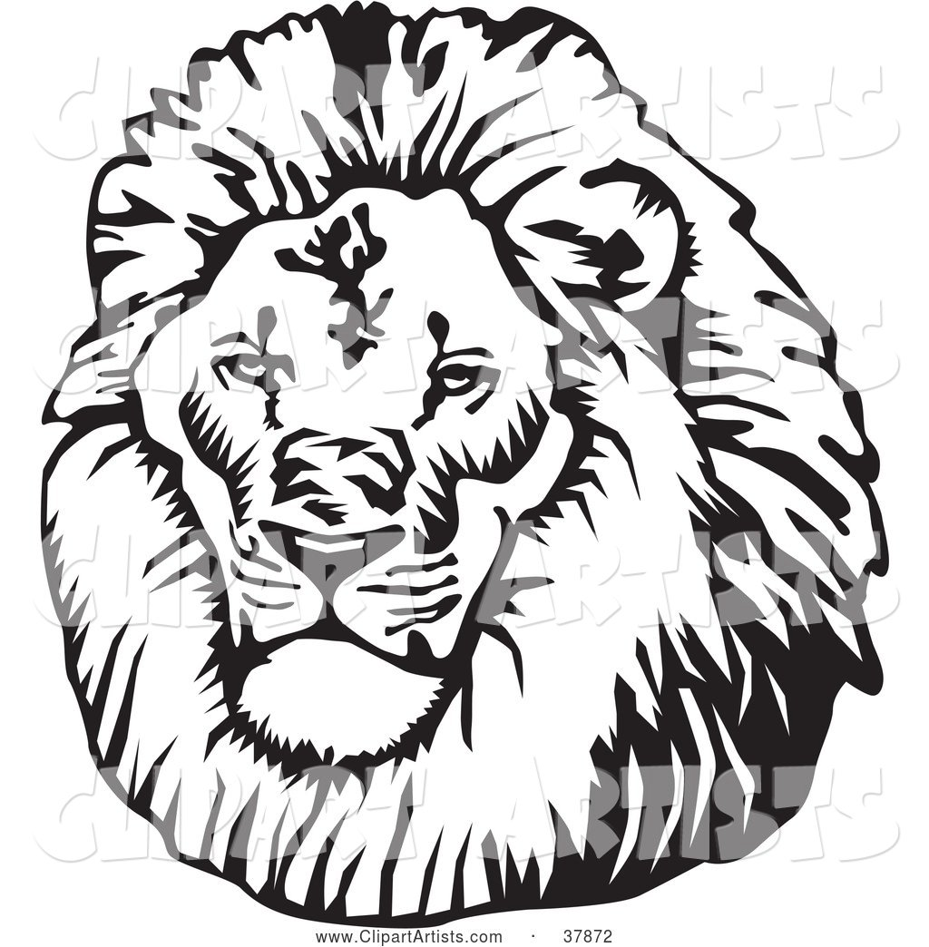 Black and White Male Lion Head