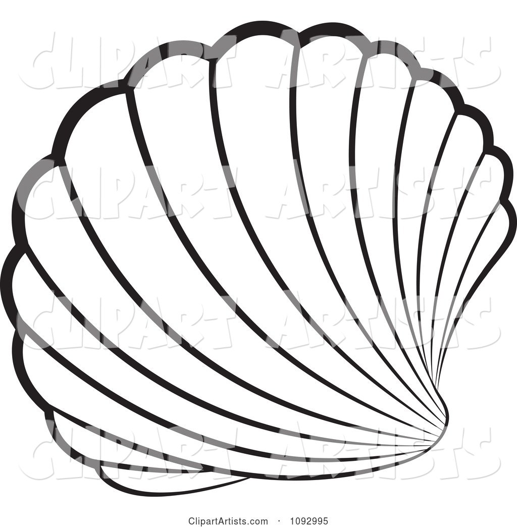 Black and White Scallop Sea Shell
