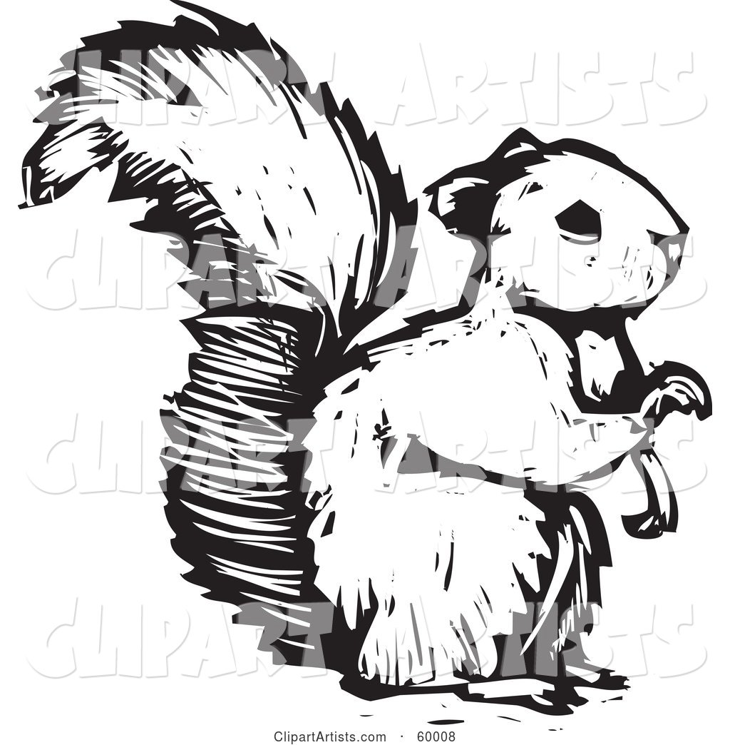 Black and White Squirrel Holding One Paw up