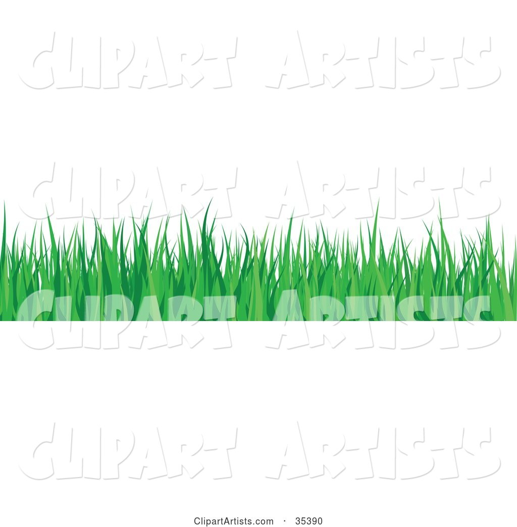 Border of Lush Green Blades of Grass