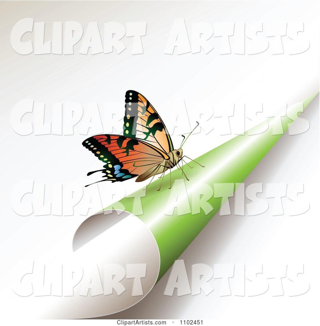 Butterfly on a Turning Green Page 1