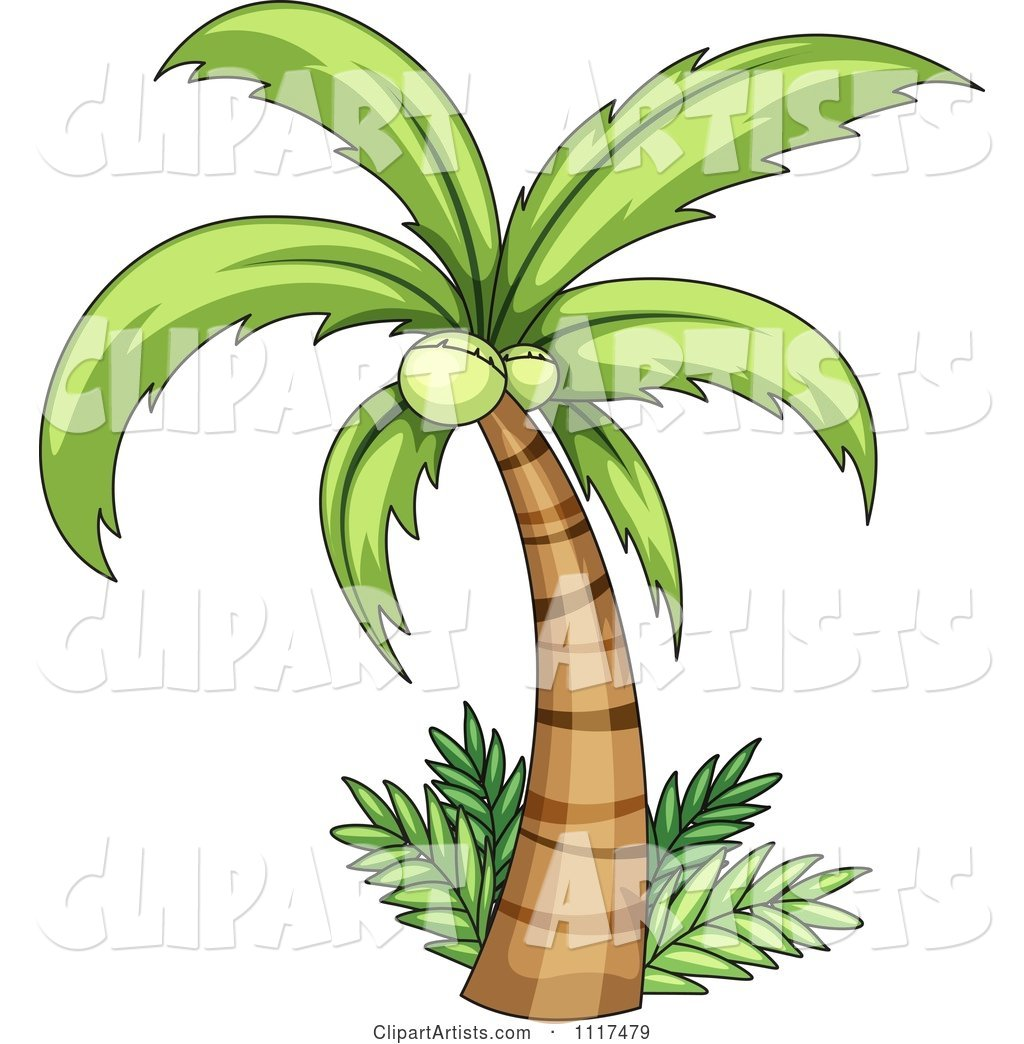 Coconut Palm Tree and Ferms
