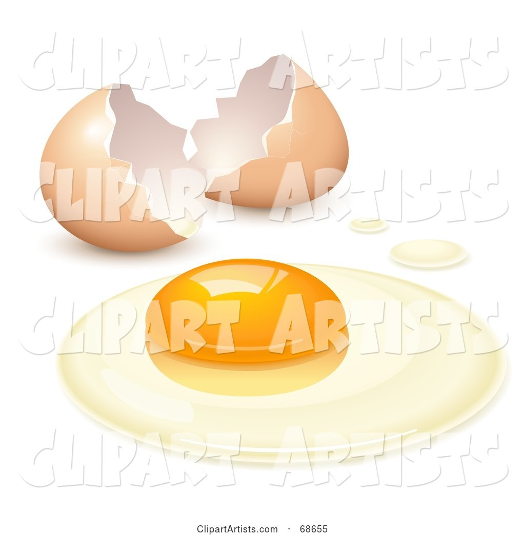 Cracked Open Egg with the Yolk and the White on a Surface