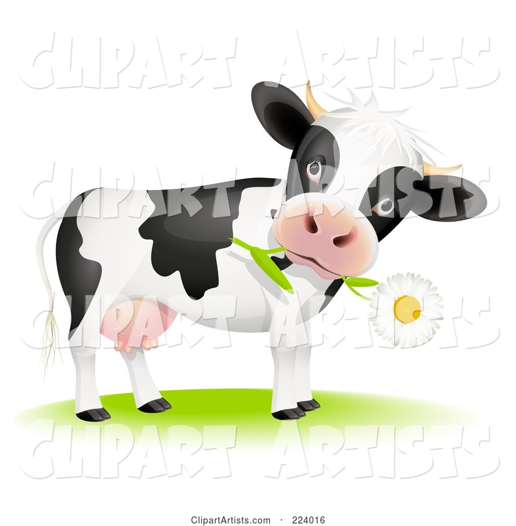 Cute Cow with a Daisy Flower in Its Mouth