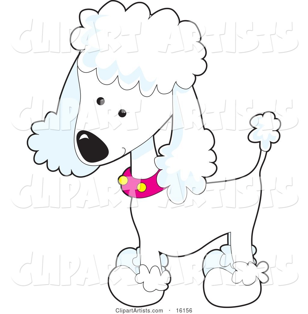 Cute White Poodle Puppy Dog Wearing a Pink Collar with Yellow Spots and Sporting a Puppy Clip