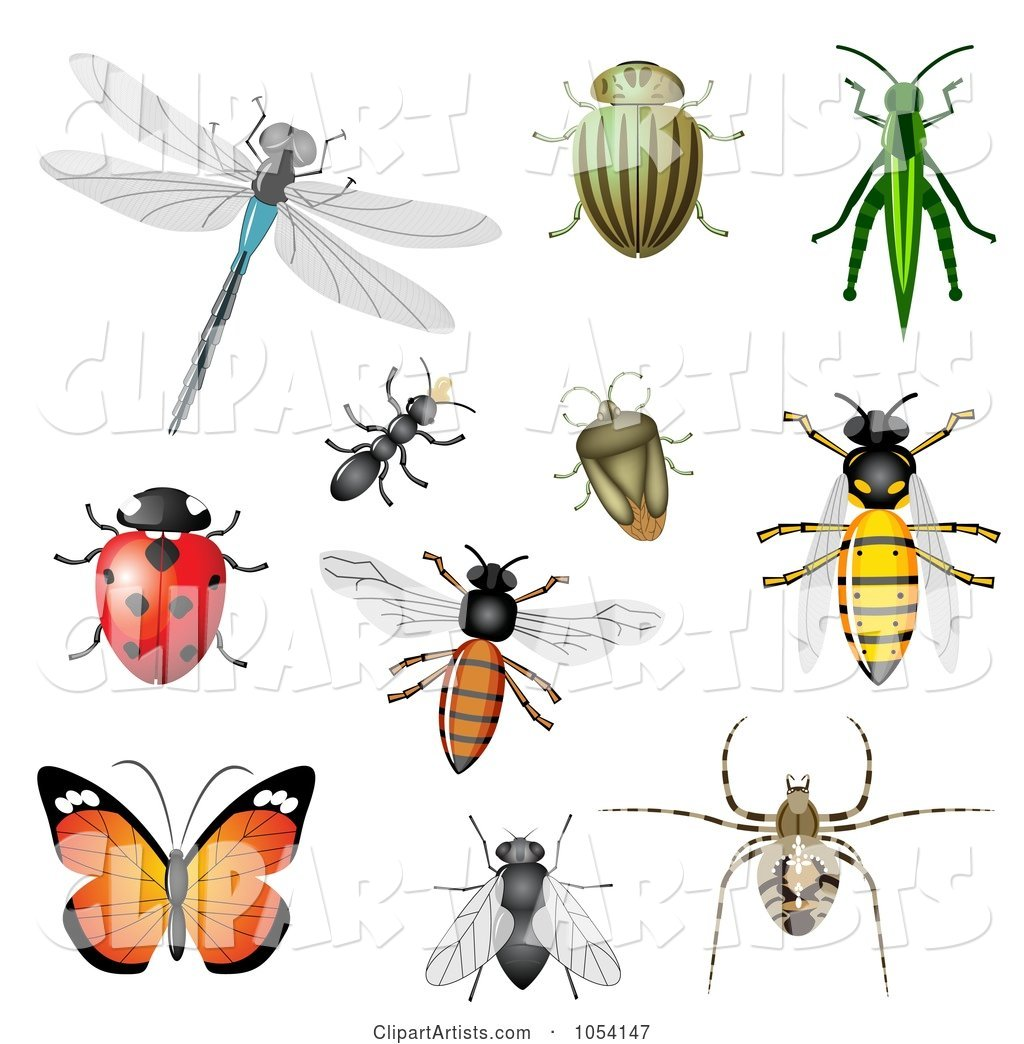 Digital Collage of Insects
