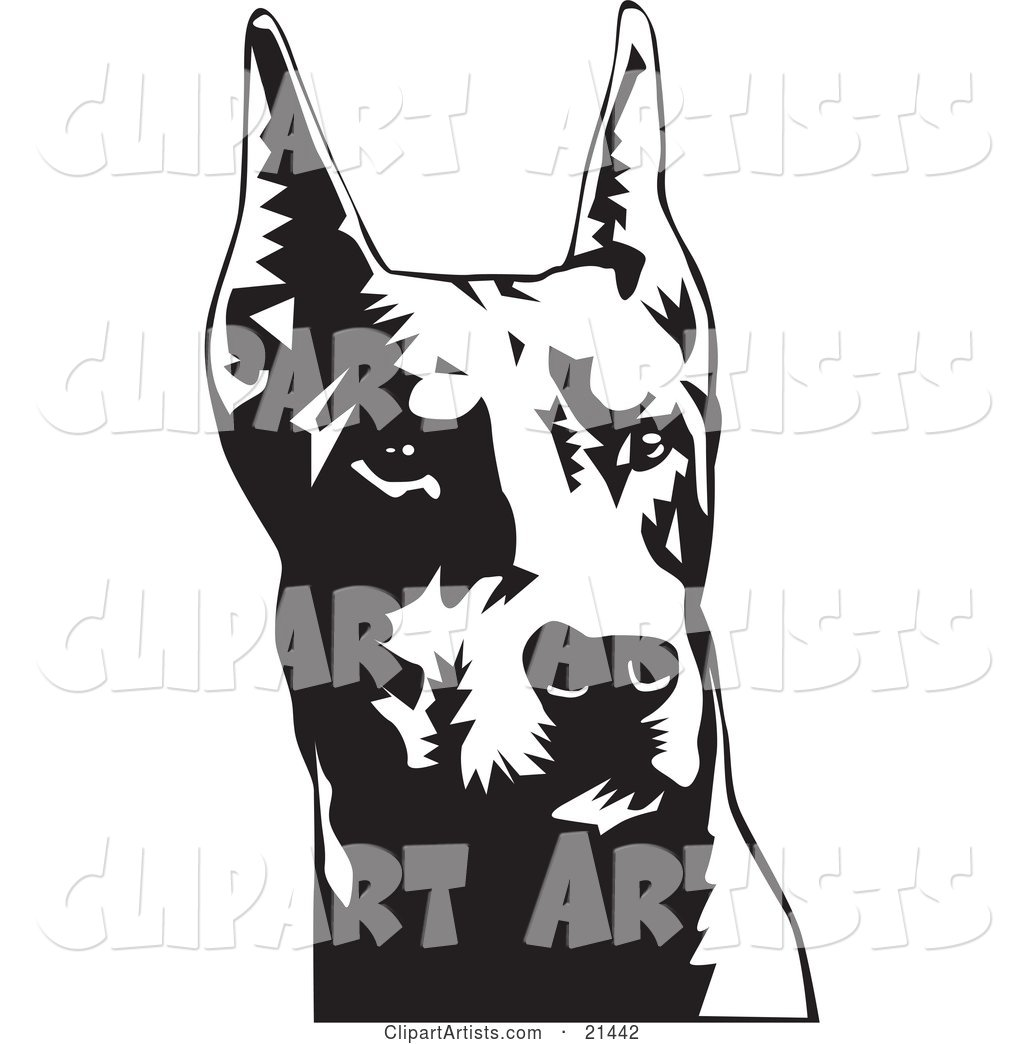 Doberman Pinscher or Dobie Dog Wiith Cropped Ears, on a White Background