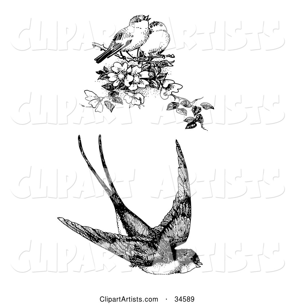 Flying Swallow and Two Singing Finches on a Blossoming Tree Branch