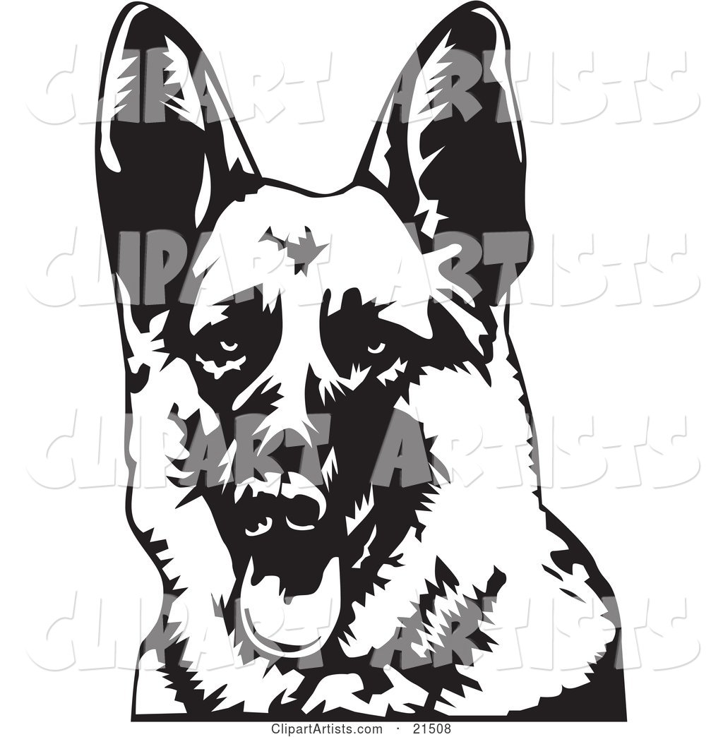 Friendly German Shepherd Dog Panting with His Tongue Hanging Out, Facing Front
