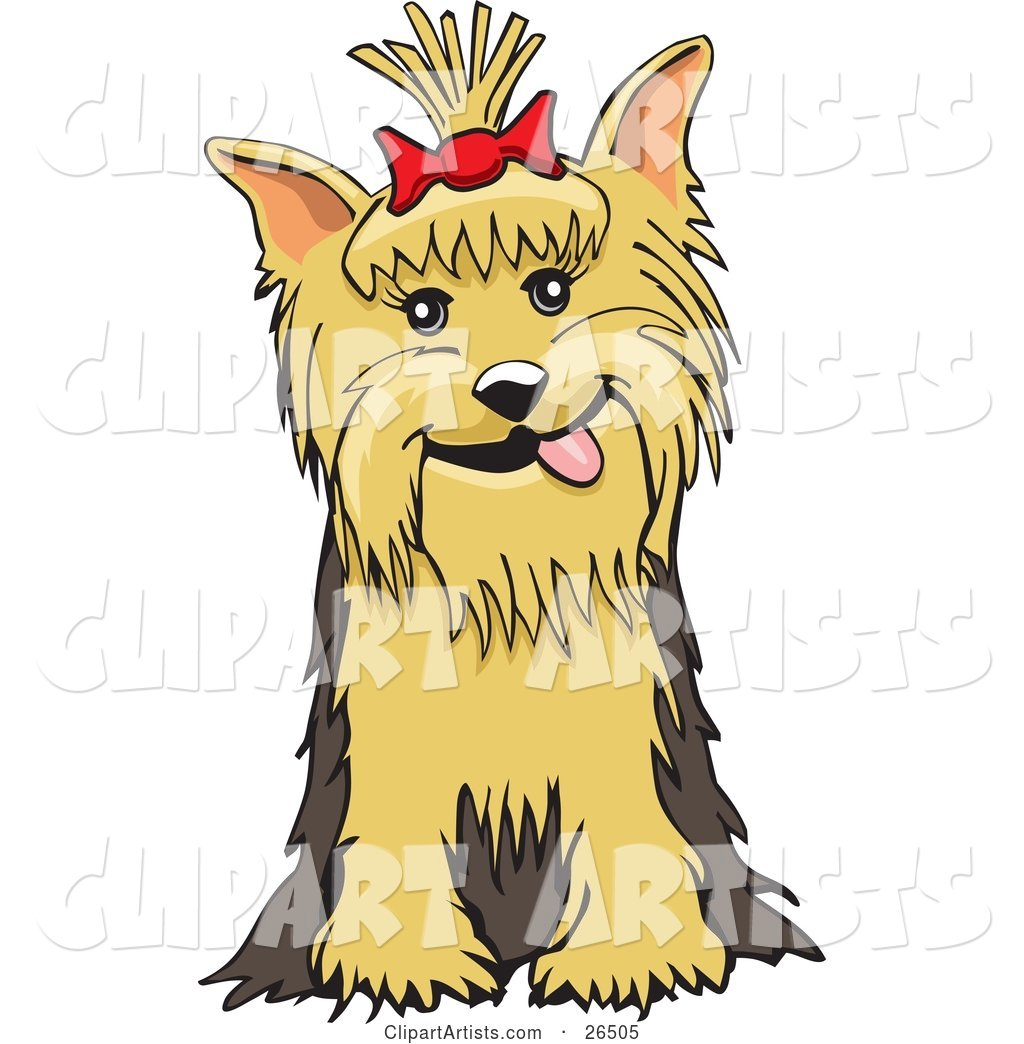 Friendly Yorkshire Terrier Dog with a Bow in Her Hair, Sitting