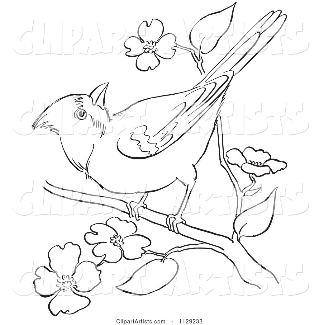 Outlined Cardinal Bird on a Blossom Branch