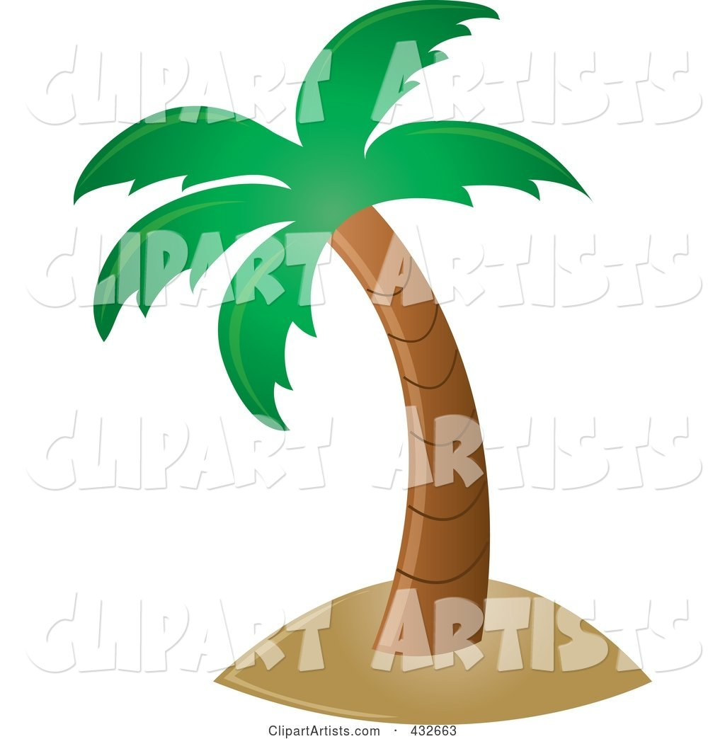 Perfect Tropical Palm Tree