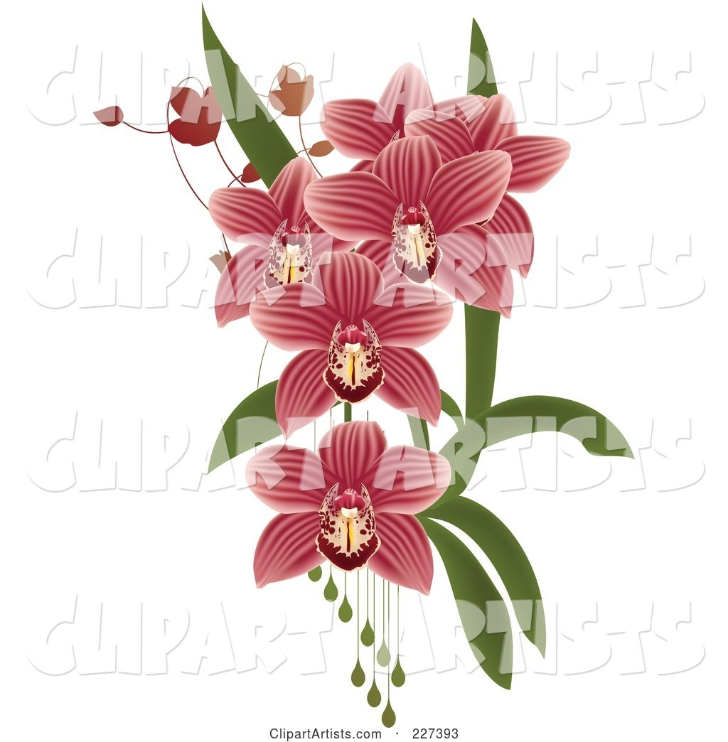 Pink Striped Orchids with Leaves and Drops