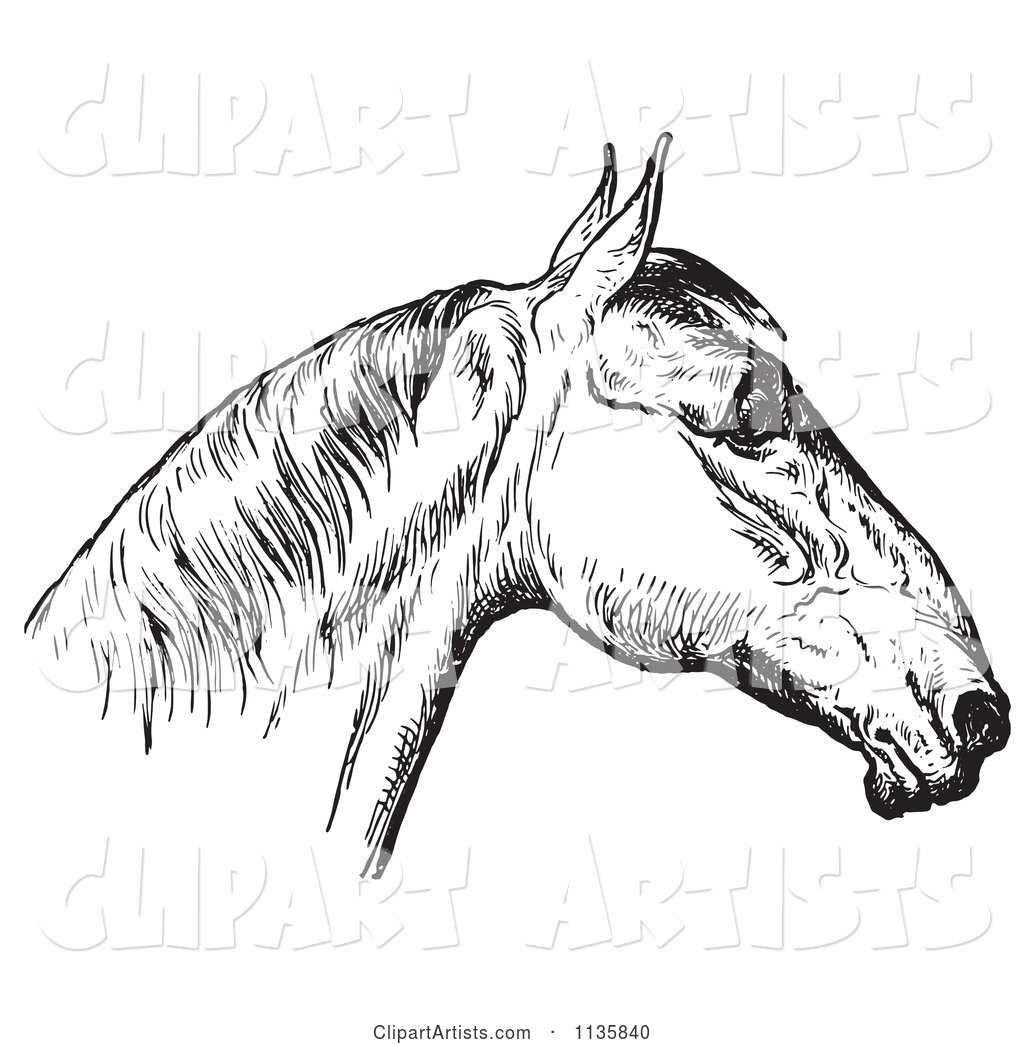 Retro Vintage Engraved Horse Anatomy of a Bad Head in Black and White 4
