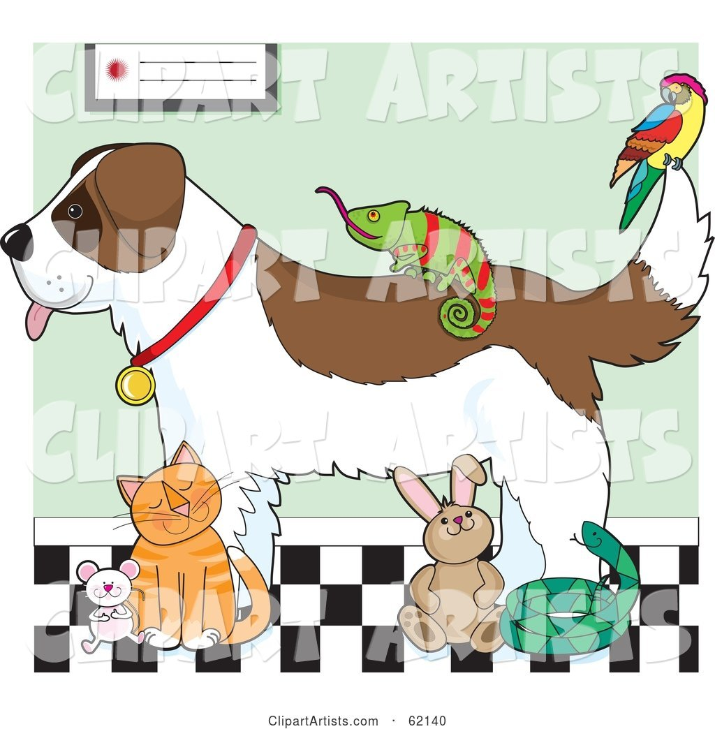 Saint Bernard Dog, Chameleon, Parrot, Mouse, Cat, Rabbit and Snake in a Veterinary Clinic