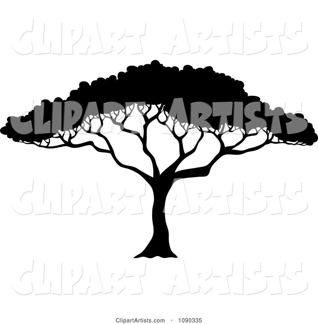 Silhouetted Acacia Tree with Lush Foliage