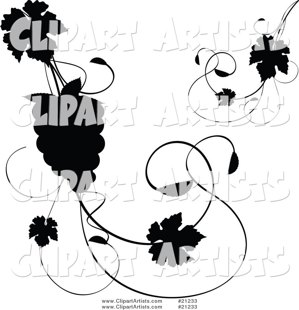 Silhouetted Grapevine with Leaves and a Bundle of Grapes over a White Background