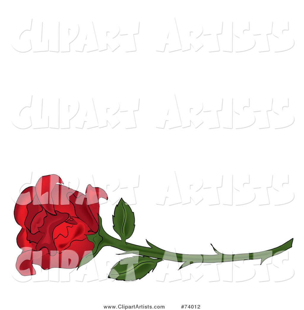 Single Red Rose on a Long Thorny Stem