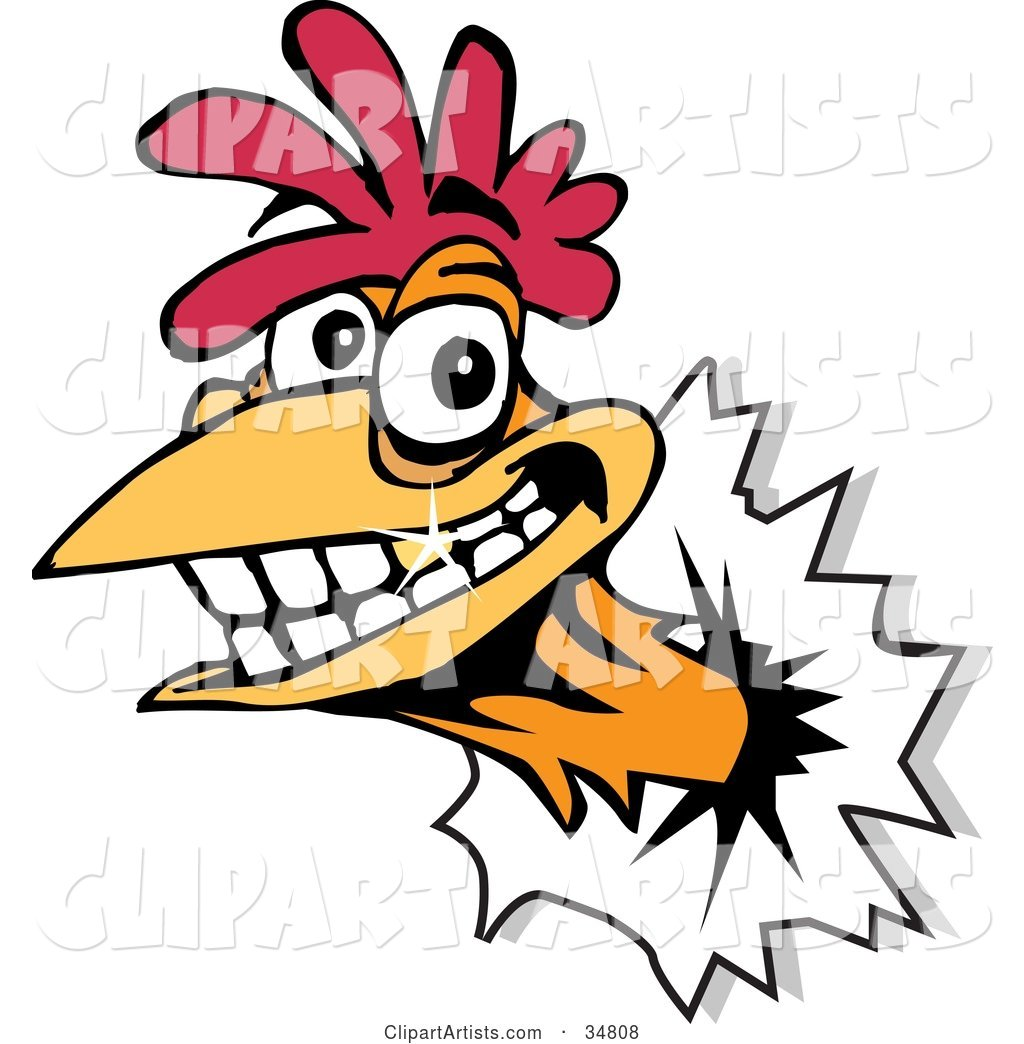 Smiling Rooster with a Gold Tooth, Breaking His Head Through a Wall