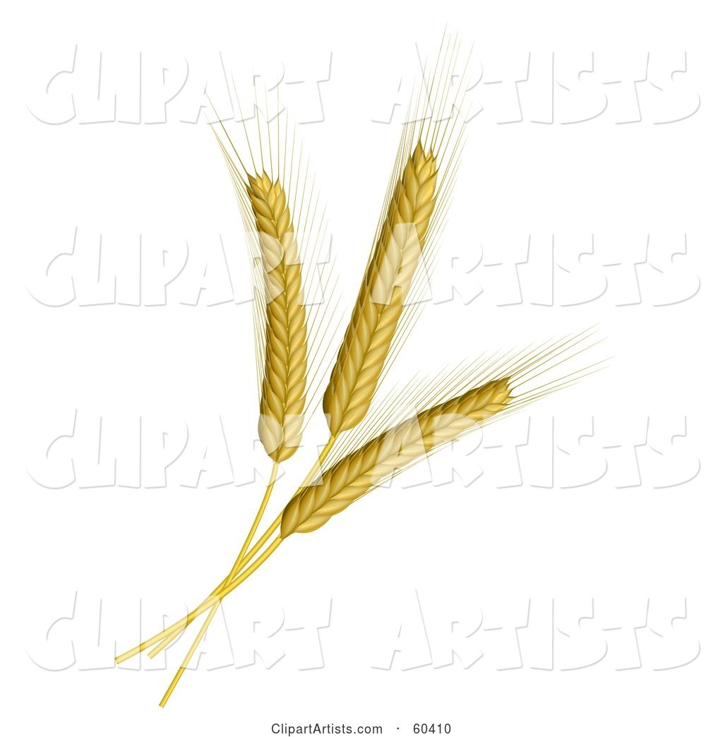 Three Wheat Stalks