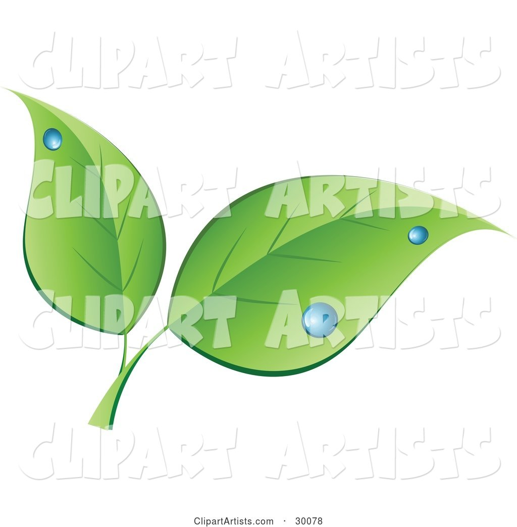 Two Green Leaves with Blue Dew Drops