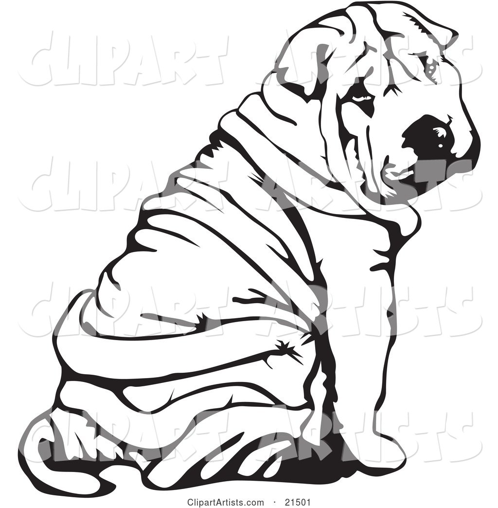 Wrinkled Chinese Shar Pei Dog, Sitting and Looking Back over His Shoulder