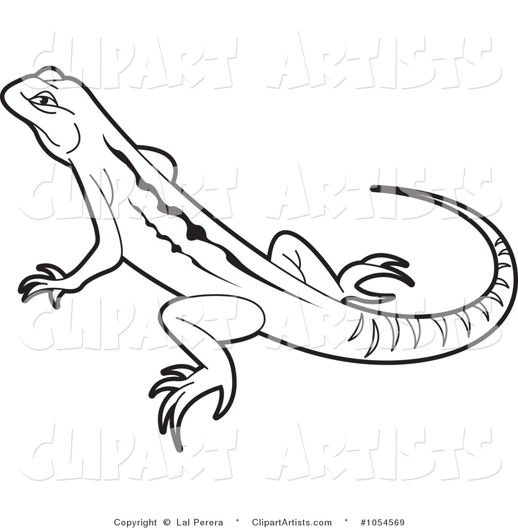 Lizard Outline Black And White  Lizard Clipart