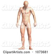 3d Acupuncture Clipart by Ralf61