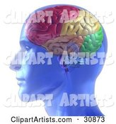 3d Brain Clipart by Tonis Pan