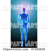 Human Skeleton with Visible Brain Skin and Bones on Blue