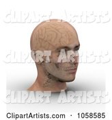 Skull and Brain Showing Through Transparent Skin on a Male Head - 3