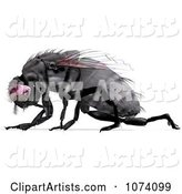 3d House Fly Clipart by Ralf61