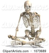 3d Skeleton Clipart by Ralf61