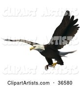 Bird Clipart by Dero