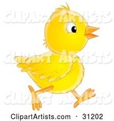 Chick Clipart by Alex Bannykh