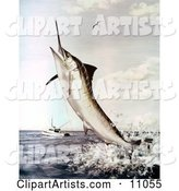 A Striped Marlin Fish Jumping to Bite a Fishing Line