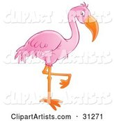Beautiful Pink Flamingo Standing on One Orange Leg