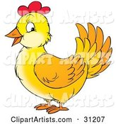 Friendly Yellow Chicken Hen with Red on Her Head