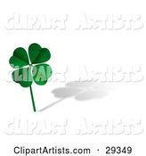 Green Textured Four Leaf Clover on a Long Stem, over a White Background with a Shadow