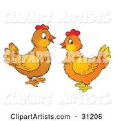 Two Chatty Chicken Hens Facing Each Other