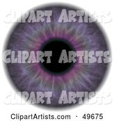 Eyeball Clipart by Arena Creative