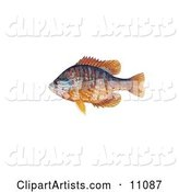 Fish Clipart by JVPD