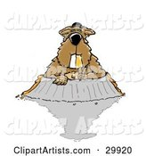 Groundhog Clipart by Spanky Art